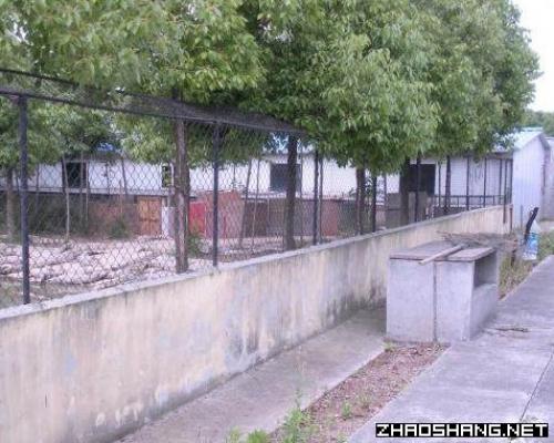 有迪斯尼旁的鳄鱼养殖场占地25亩出售